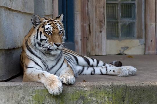 حديقة حيوان في أنتويرب