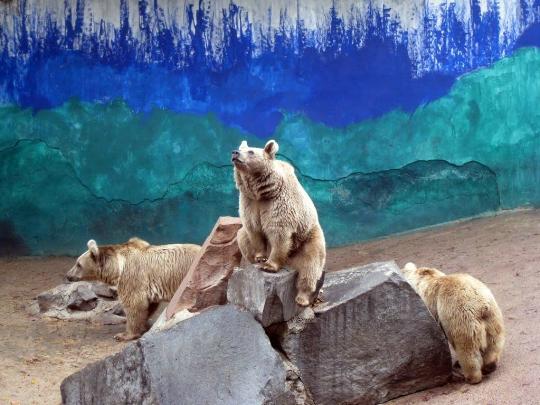 Zoo in Jerevan
