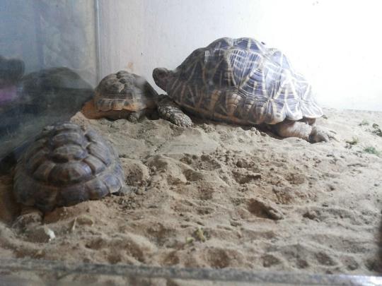 Zoo in Baku