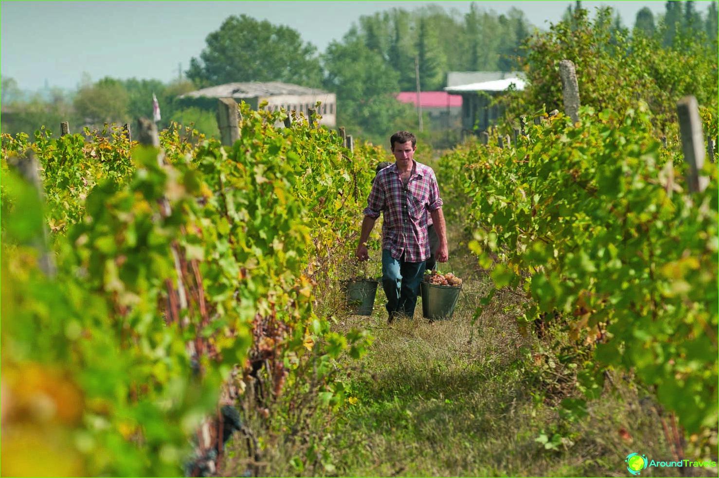 Wijnen van Georgië