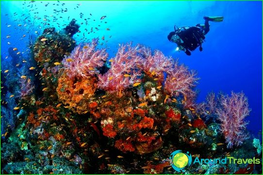 Sukellus Mauritiuksessa