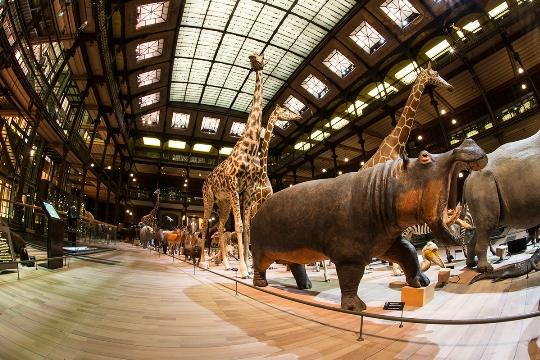 Luonnontieteellinen museo Pariisissa