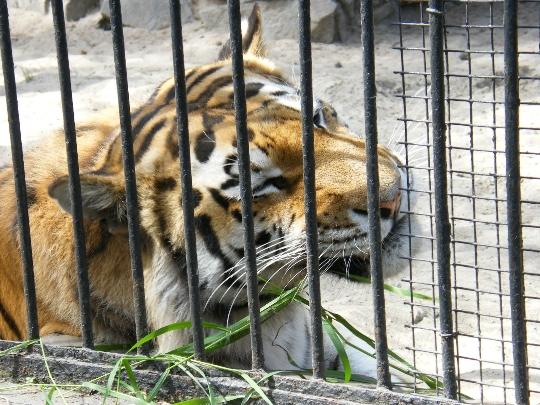 Zoo in Tbilisi