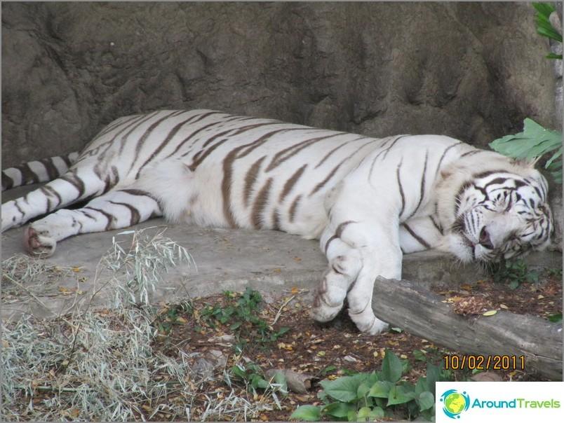 Bangkokin eläintarha
