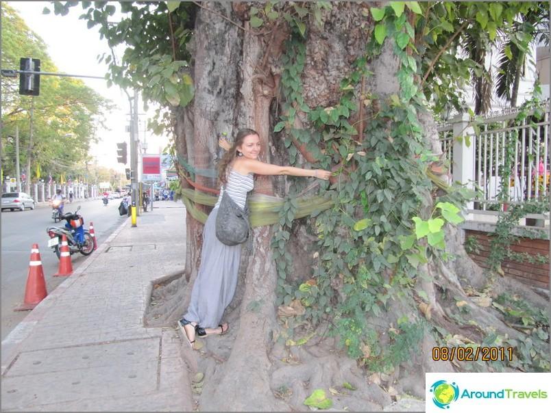 Puut eivät halaa