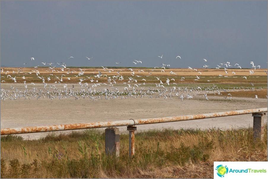 Пазар на птици - началото на езерото Хан