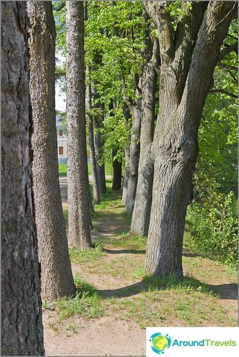 Hauskat puut istutettu