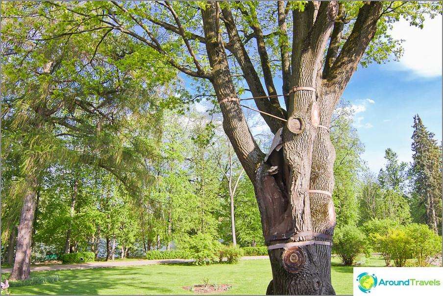 Puut säästävät metallisiteillä