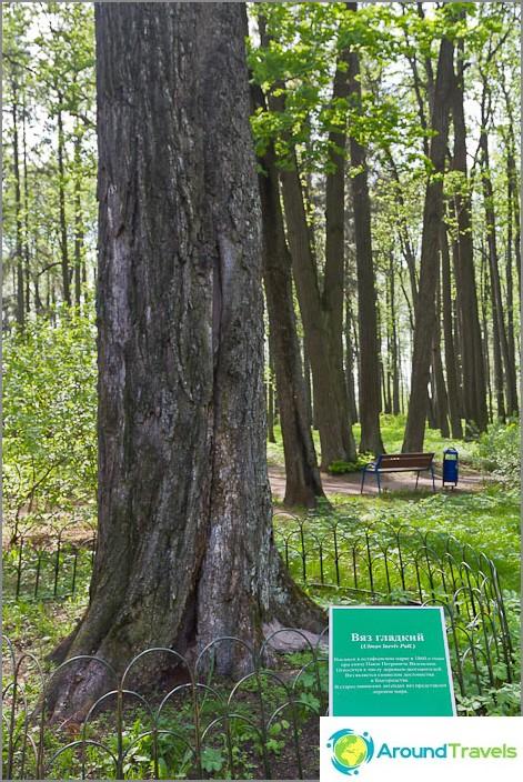 Merkittävät puut allekirjoitettu