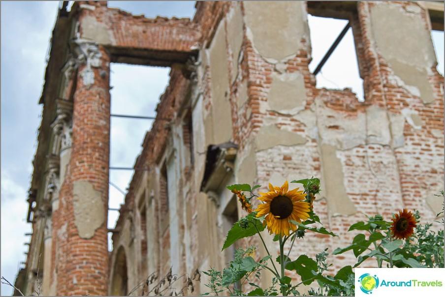 От някъде тук растат слънчогледи