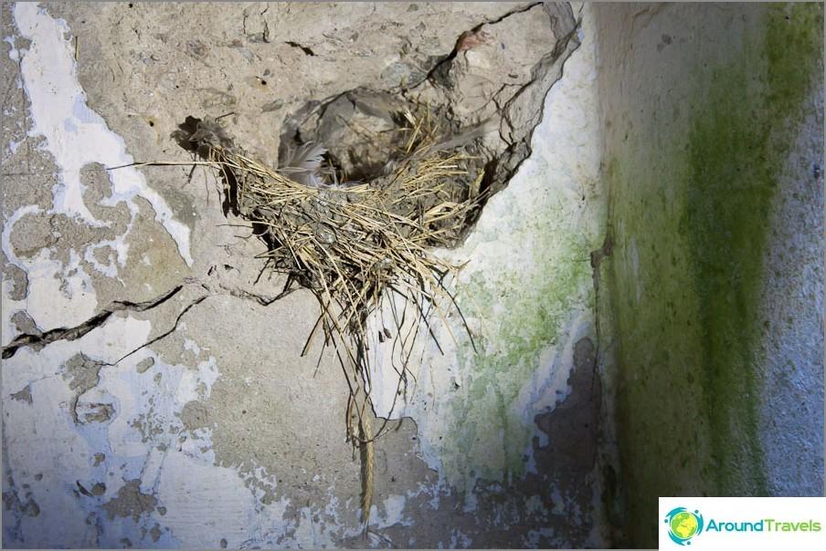 Птиците, сгушени в руини