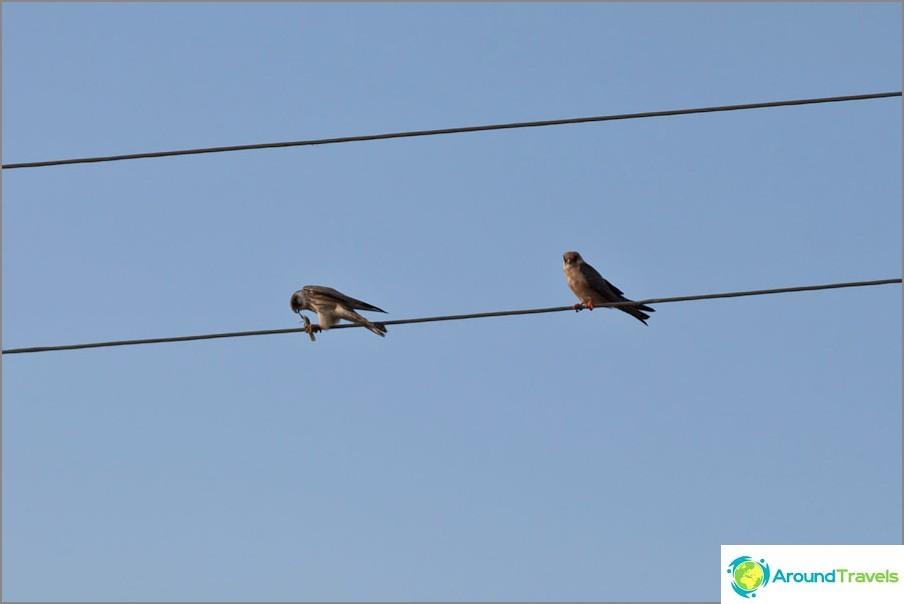 Хищна птица яде някой