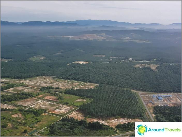 Palmuja - miljoonia vihreitä siilejä