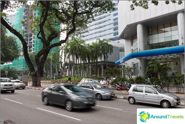 Palmuja ja muuta luonnonvaraista kasvillisuutta kaduilla