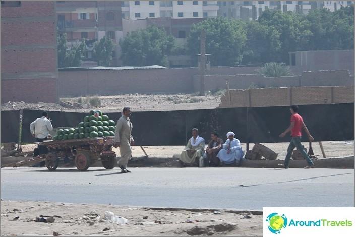 Egypti. Kairo. Vesimelonien myyjät.
