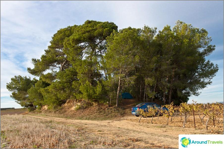 Една от нашите нощи е островче от дървета в открито поле.