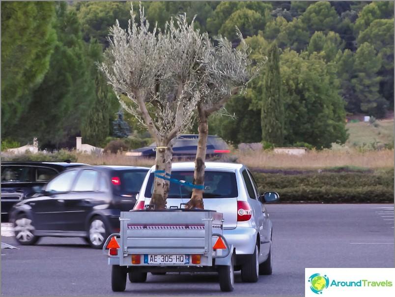 Купете едно дърво, вземете второ като подарък