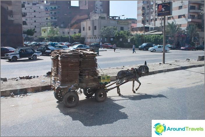 Egypti. Kairo. Yksi ajoneuvoista.