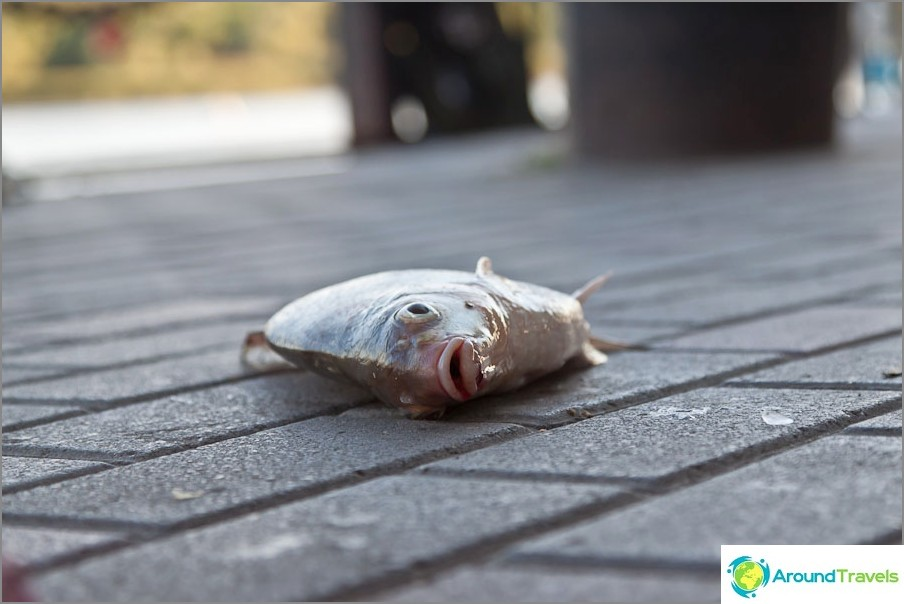 Kala kävelykadulla kaupungin keskustassa
