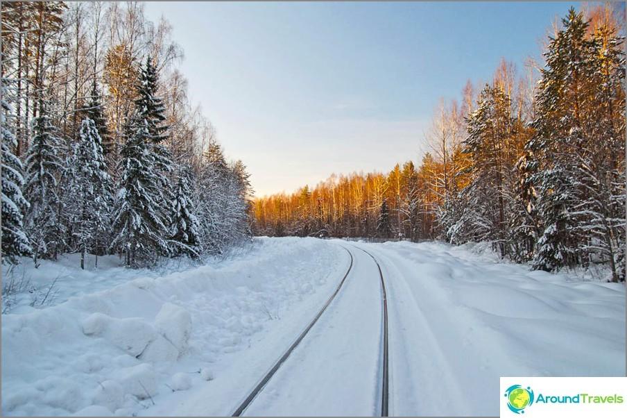 I Vologda-utmarken, på skogsbruket av Monza-järnvägen