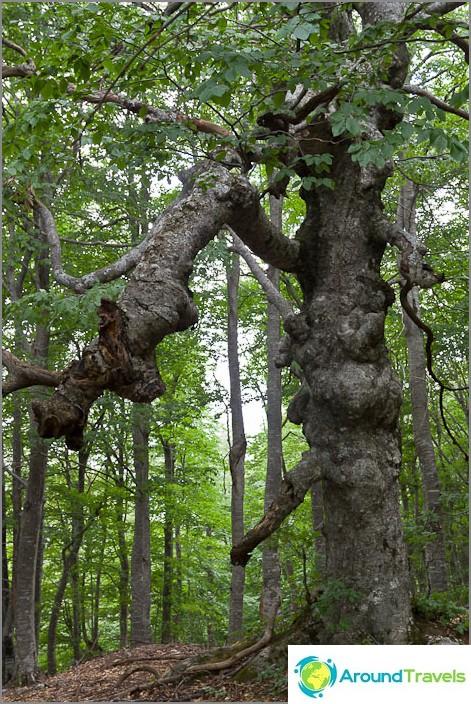 Uskomattomia puita törmännyt