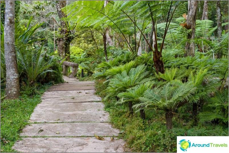 Национален парк Дой Итанон (20)