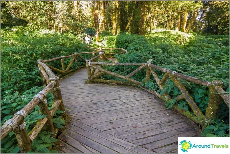 Национален парк Дой Итанон (43)