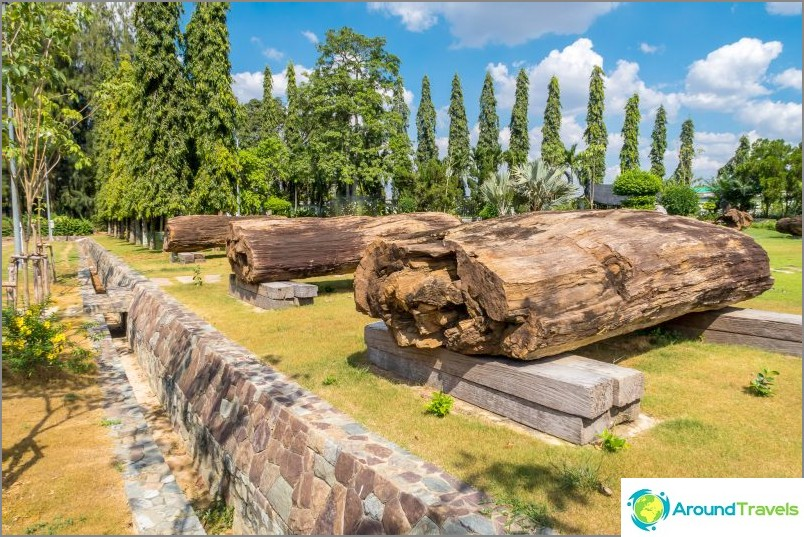 Miljardisen kivettyneiden puiden rungot