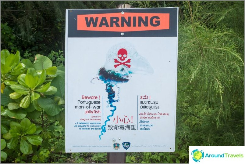 Deadly Jellyfish Warning - portugalilainen vene