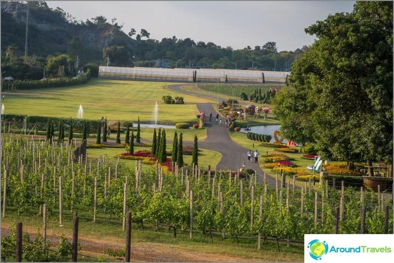 Hopeajärven viinitarha Pattayassa