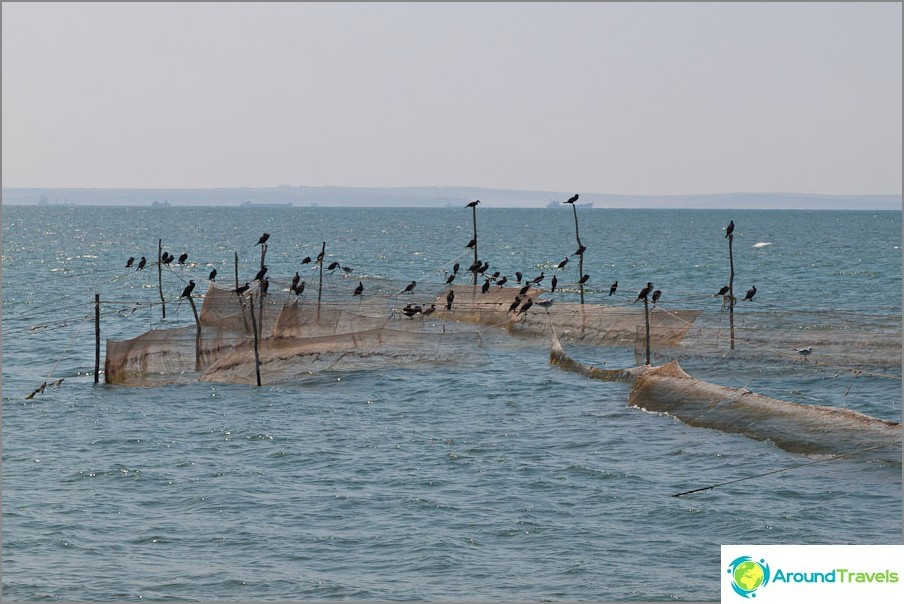 Kalastusvälineet