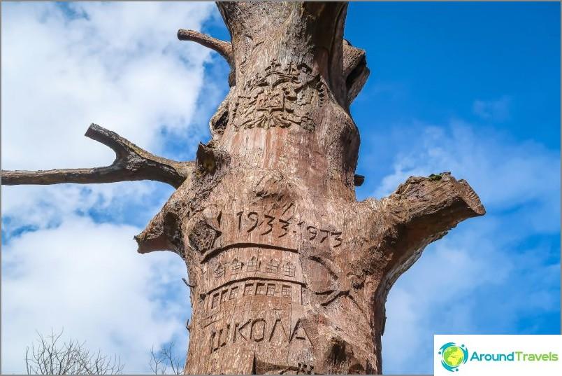 البلوط في قرية Estosadok - من بقايا المجتمع الإستوني