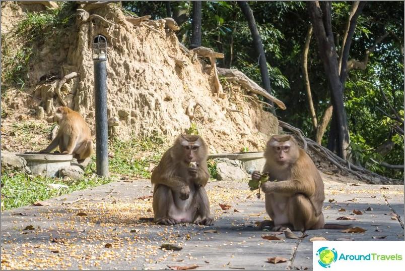Маймунския хълм в Пукет