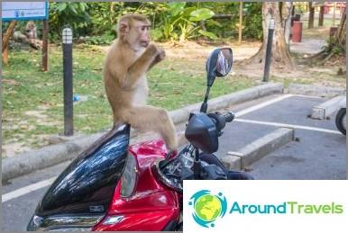 Опасна планина на маймуни в Пукет - Маймунски хълм