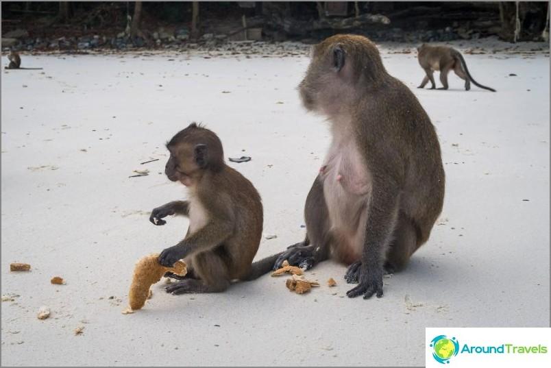 Apinan ranta Phi Phi Donissa