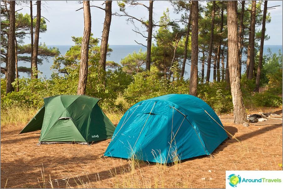 Teltat Pizundan mäntyissä