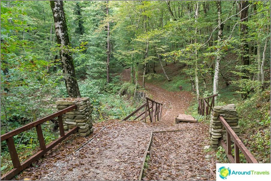 Menemme pidemmälle metsän läpi