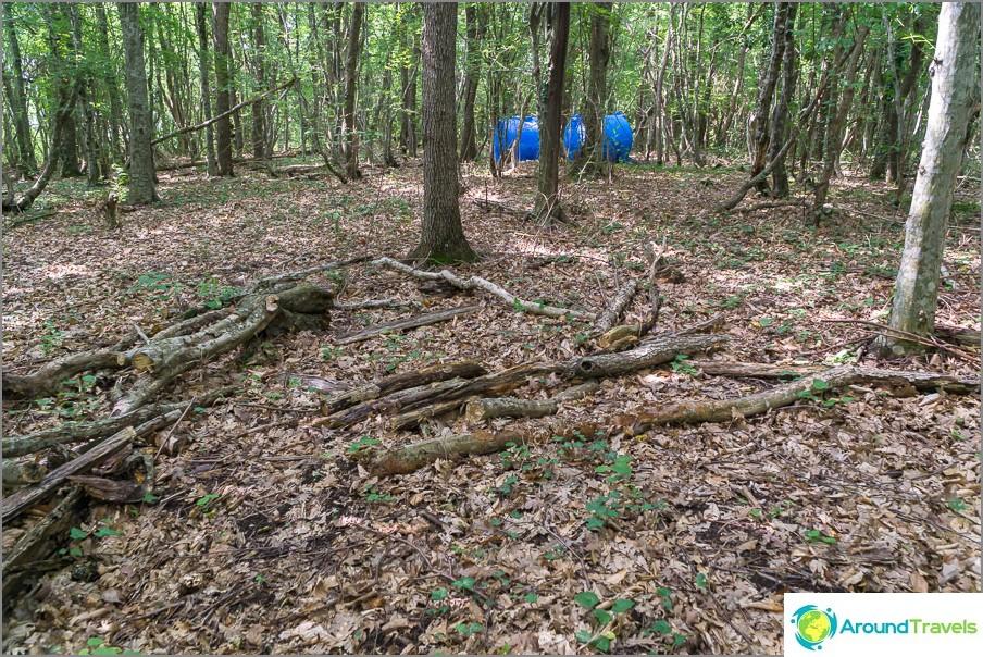 Metsä on edelleen täynnä ilmaisia polttopuita