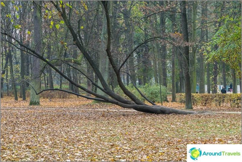 Дърво за почивка