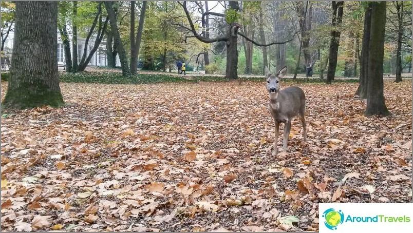 Елен в парк Laeznky