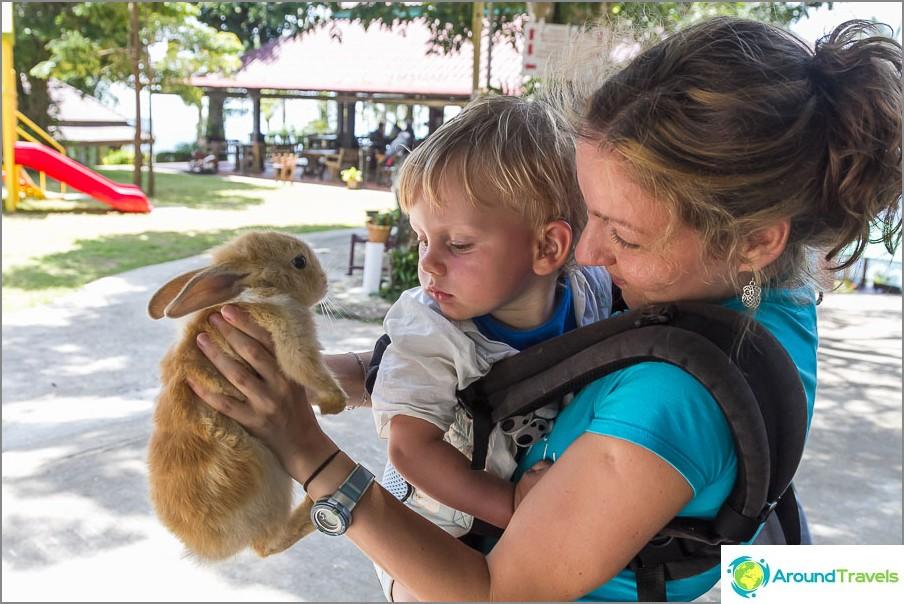 Egor pelkää enemmän kania kuin hän on (Paradise Park)