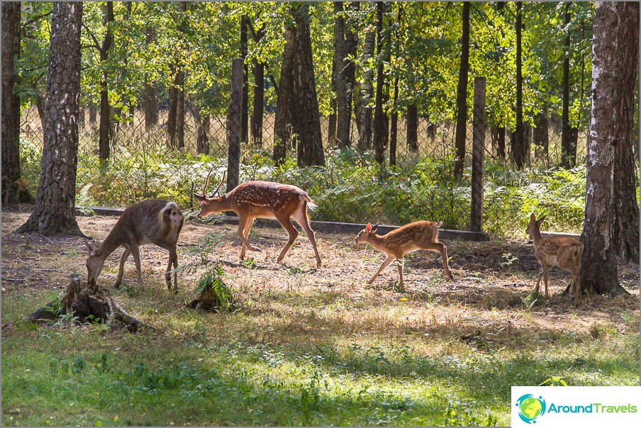 Deer päivystyksessä