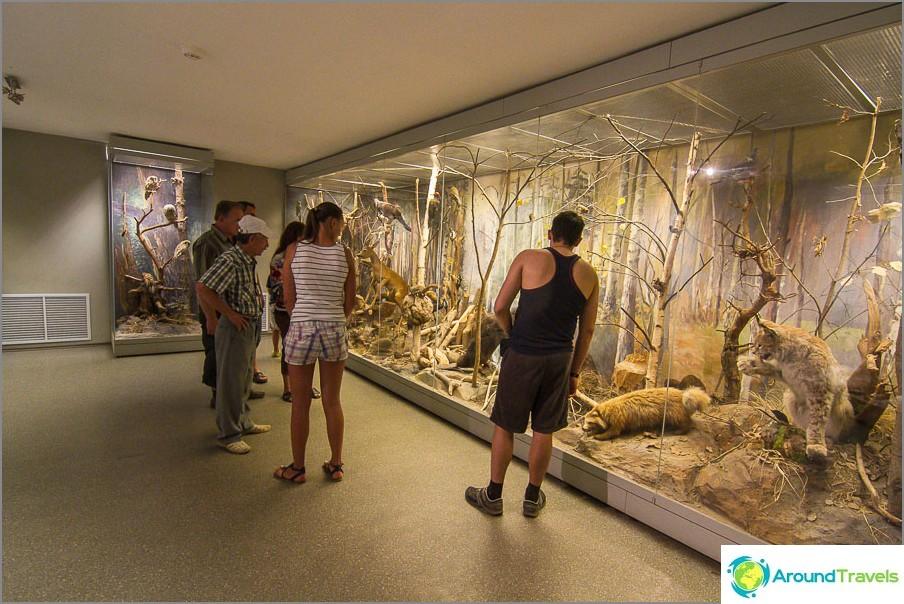 Museokierros