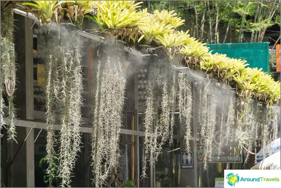 Kukkia kastelu lähellä kahvilaa