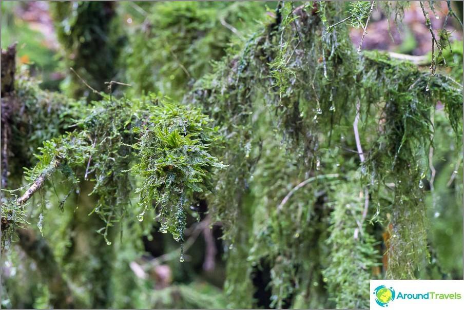 Moss on niin mehukas, että haluat syödä sen