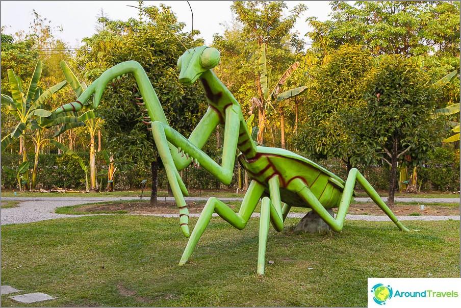 Suuri Mantis vaelsi kuninkaallista kasvistoa