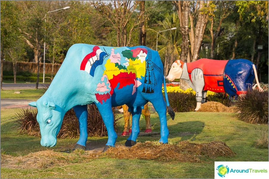 Kansainväliset lehmät