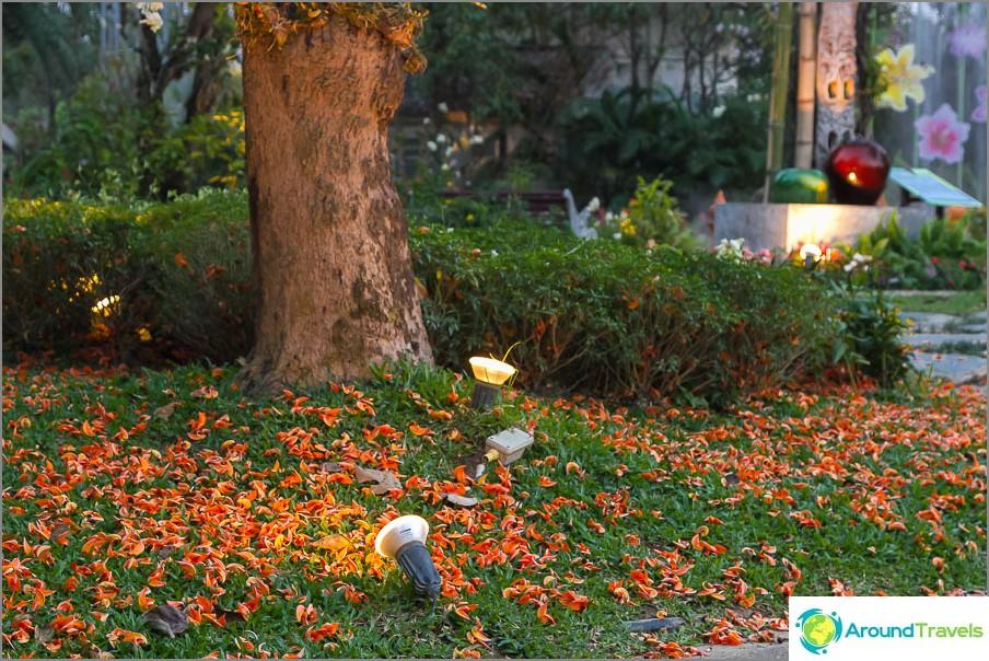 Puusta kaatuneet terälehdet, kauniit