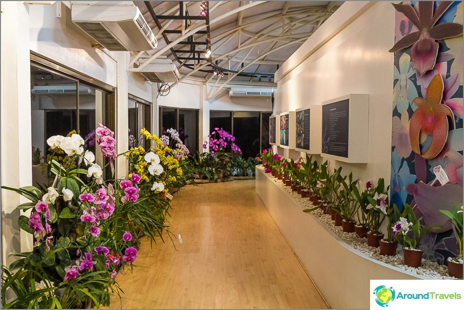 Orkideapaviljonki
