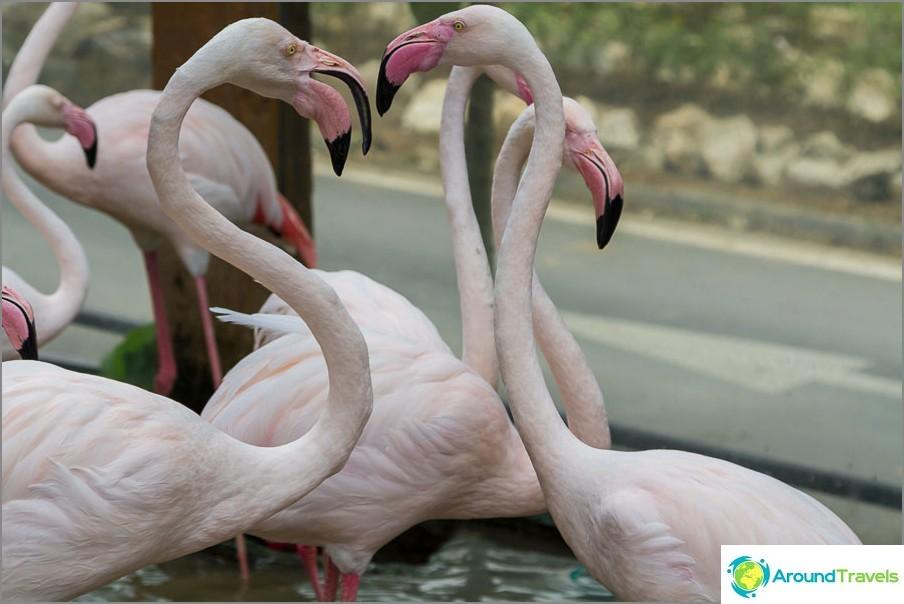 Flamingo, myös sisäänkäynnillä